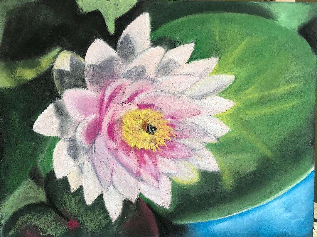 Pastel painting of waterlily by Susan Marino